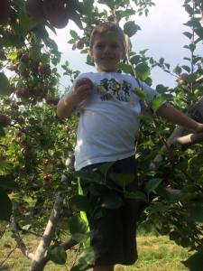 blog-apple-picking